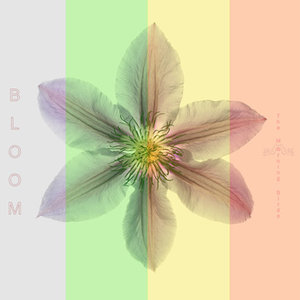 The Morning Birds: Bloom (Funky Island House Records)